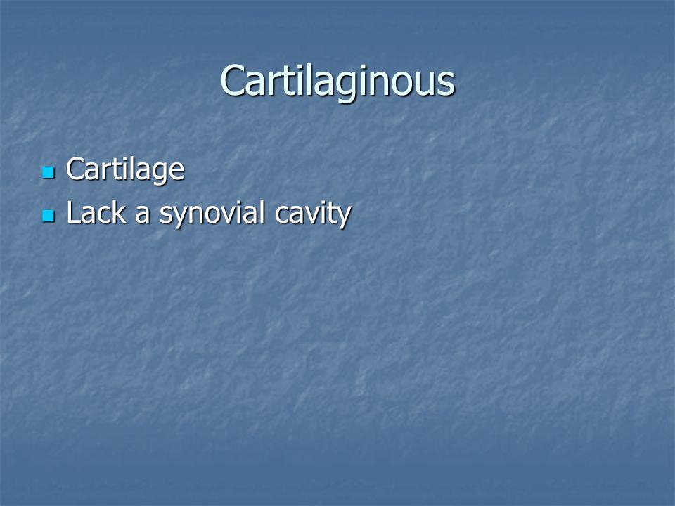 Cartilaginous Cartilage Lack a synovial cavity