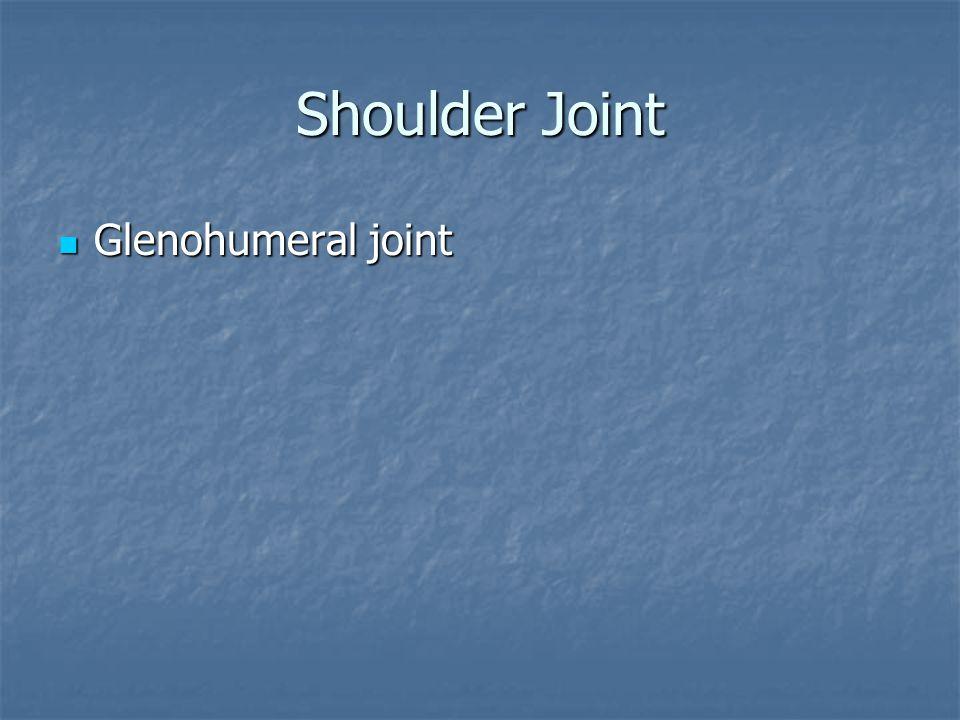 Shoulder Joint Glenohumeral joint