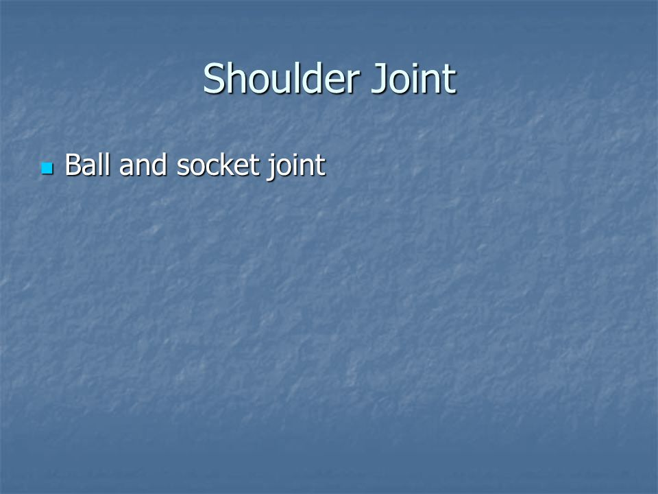 Shoulder Joint Ball and socket joint