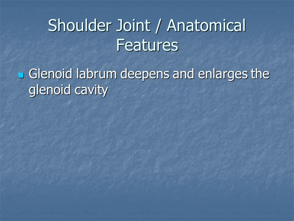 Shoulder Joint / Anatomical Features