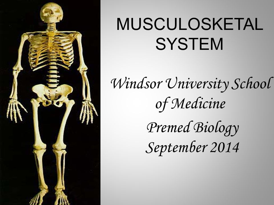 MUSCULOSKETAL SYSTEM Windsor University School of Medicine