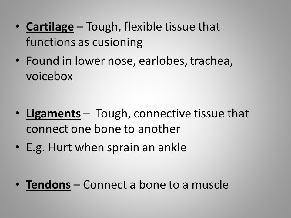 Cartilage – Tough, flexible tissue that functions as cusioning