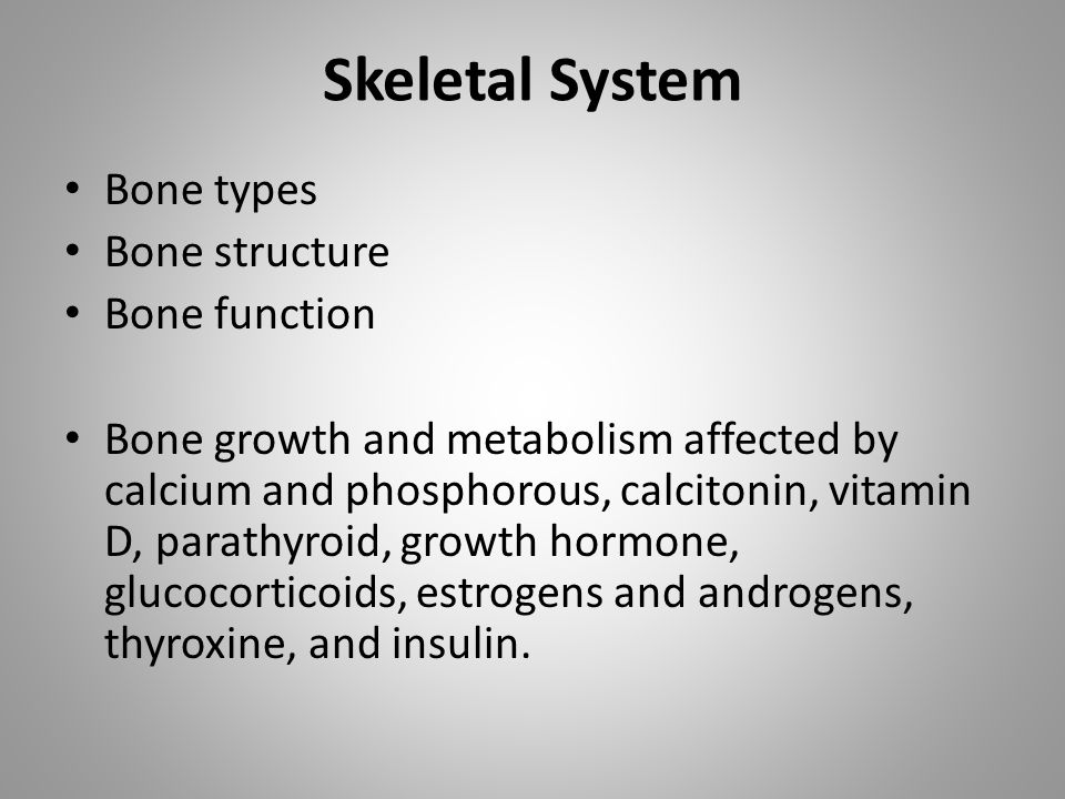 Skeletal System Bone types Bone structure Bone function