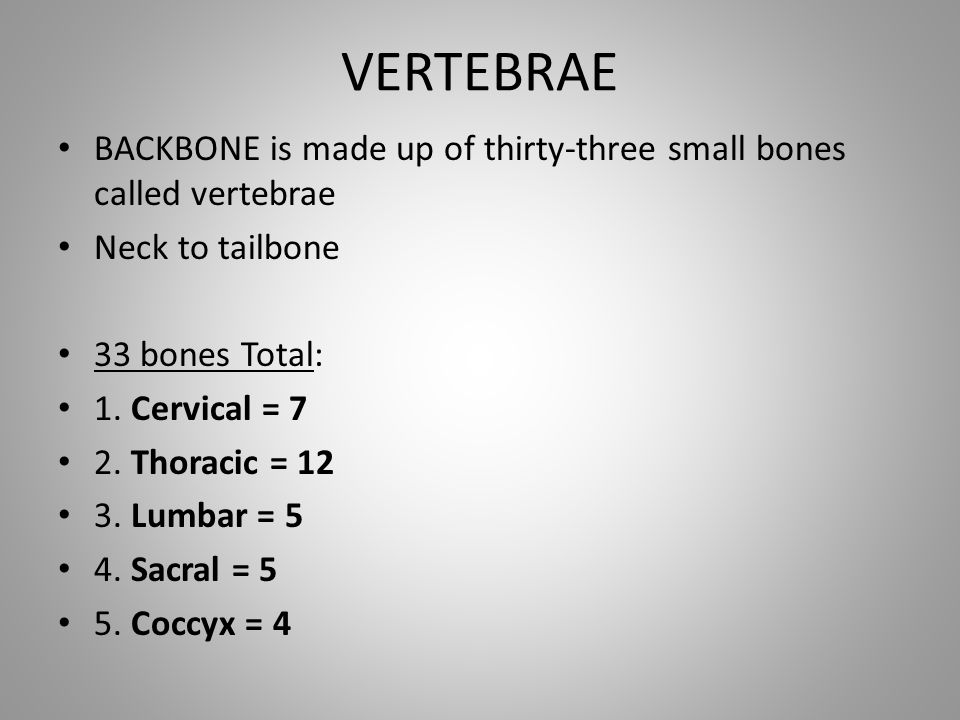 VERTEBRAE BACKBONE is made up of thirty-three small bones called vertebrae. Neck to tailbone. 33 bones Total: