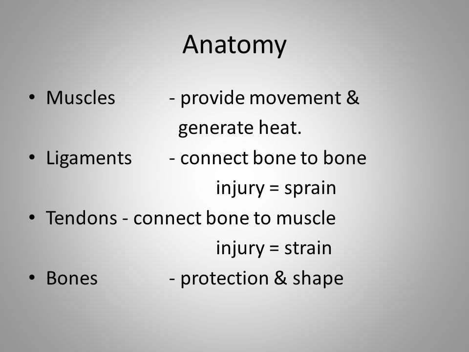 Anatomy Muscles - provide movement & generate heat.