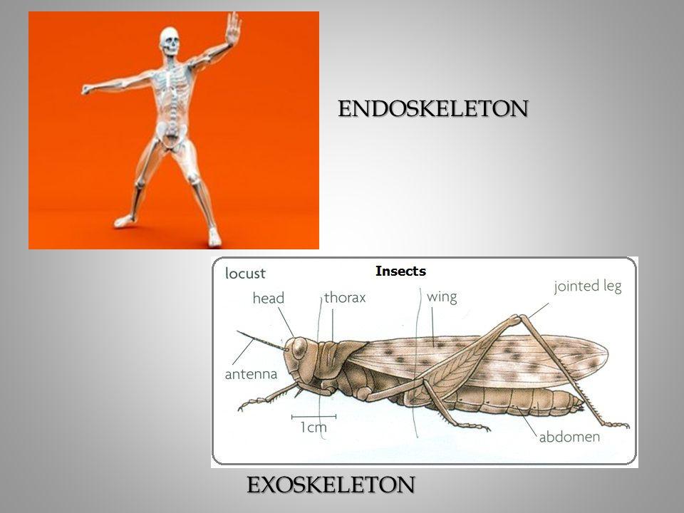 ENDOSKELETON EXOSKELETON