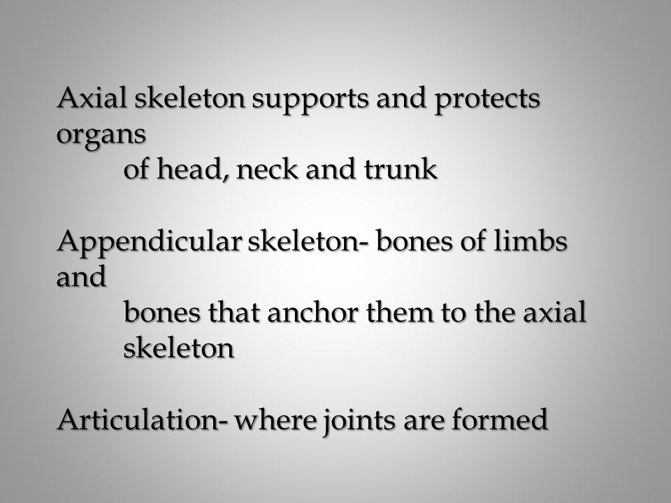 Axial skeleton supports and protects organs