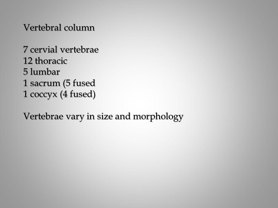 Vertebral column 7 cervial vertebrae. 12 thoracic. 5 lumbar. 1 sacrum (5 fused. 1 coccyx (4 fused)