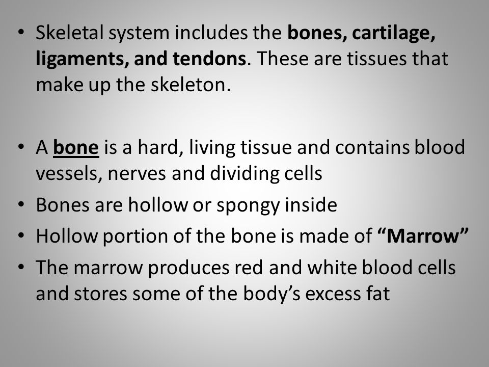 Skeletal system includes the bones, cartilage, ligaments, and tendons