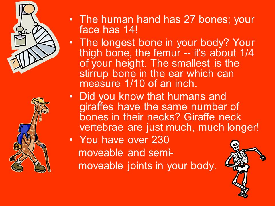 The human hand has 27 bones; your face has 14!