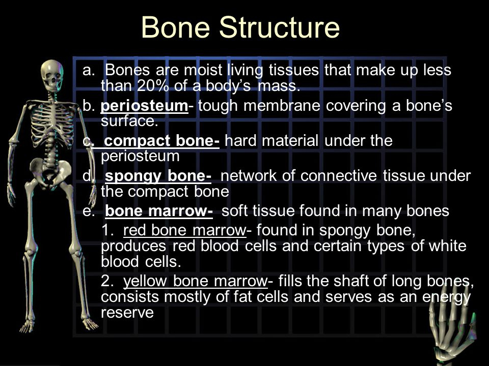 Bone Structure a. Bones are moist living tissues that make up less than 20% of a body's mass.