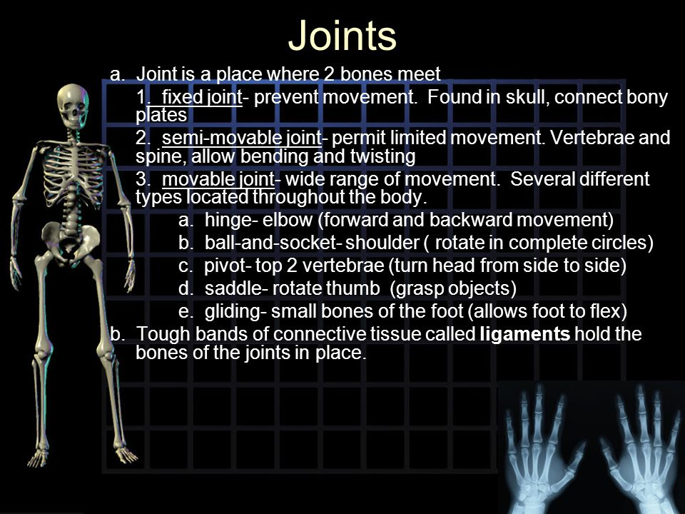 Joints a. Joint is a place where 2 bones meet