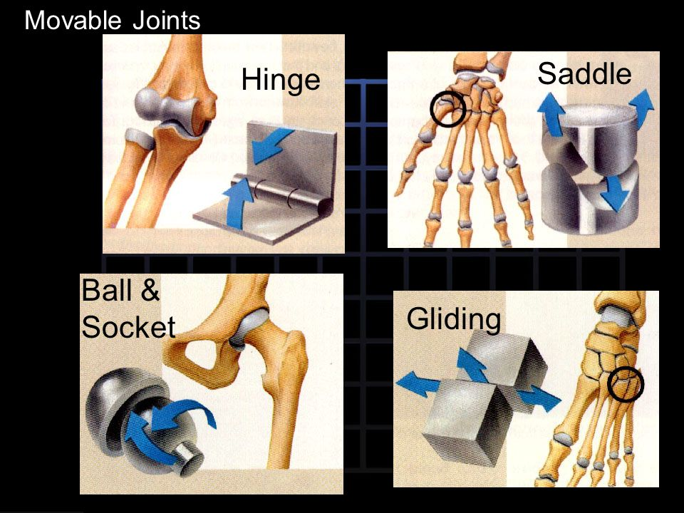 Movable Joints Saddle Hinge Ball & Socket Gliding