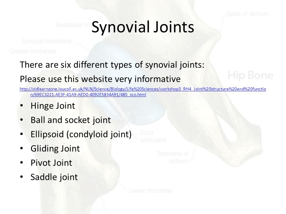 Synovial Joints There are six different types of synovial joints: