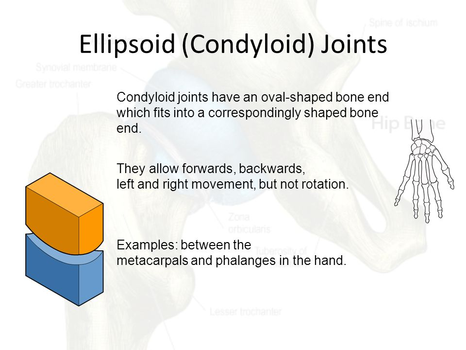 Ellipsoid (Condyloid) Joints