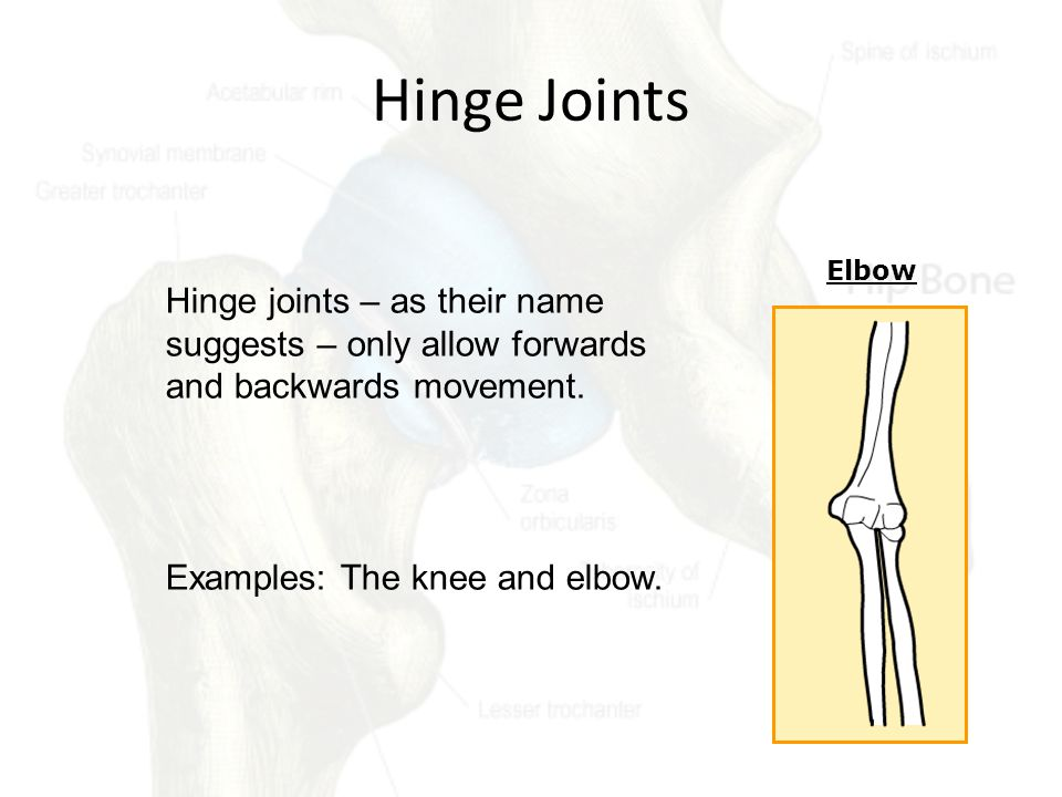Hinge Joints Elbow. Hinge joints – as their name suggests – only allow forwards and backwards movement.