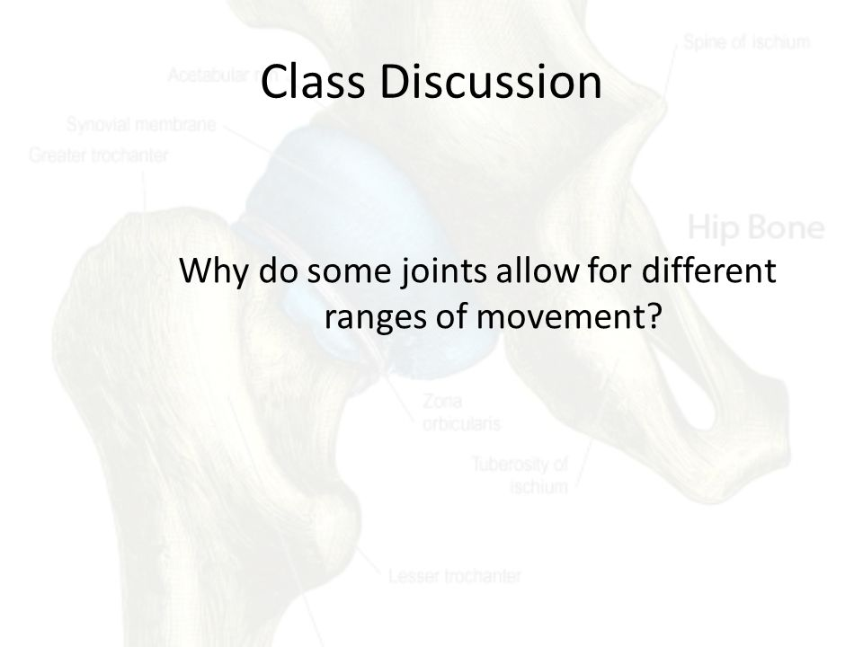 Why do some joints allow for different ranges of movement