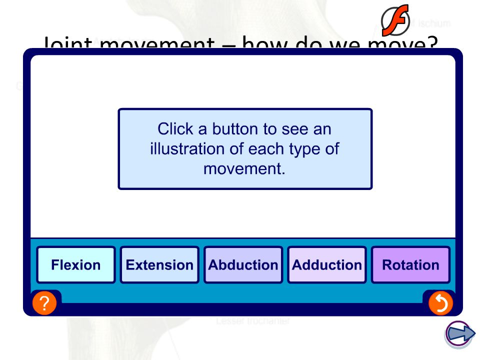 Joint movement – how do we move