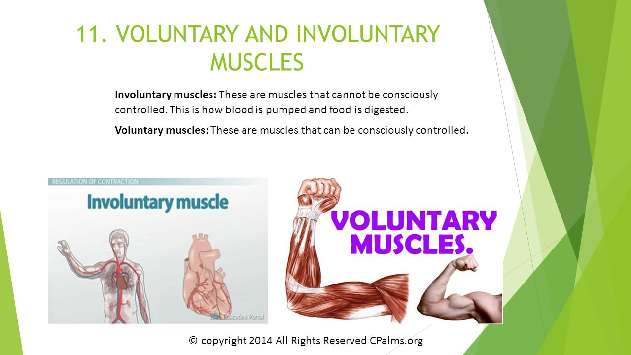 11. VOLUNTARY AND INVOLUNTARY MUSCLES