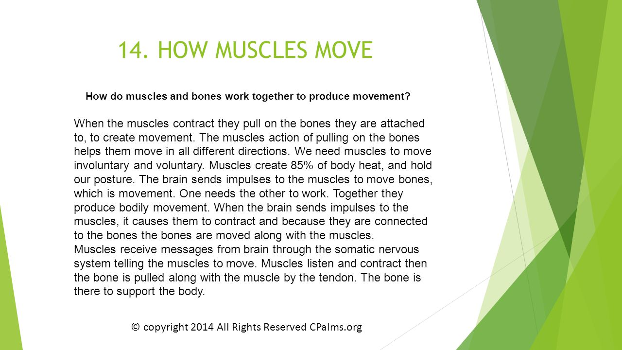 14. HOW MUSCLES MOVE How do muscles and bones work together to produce movement