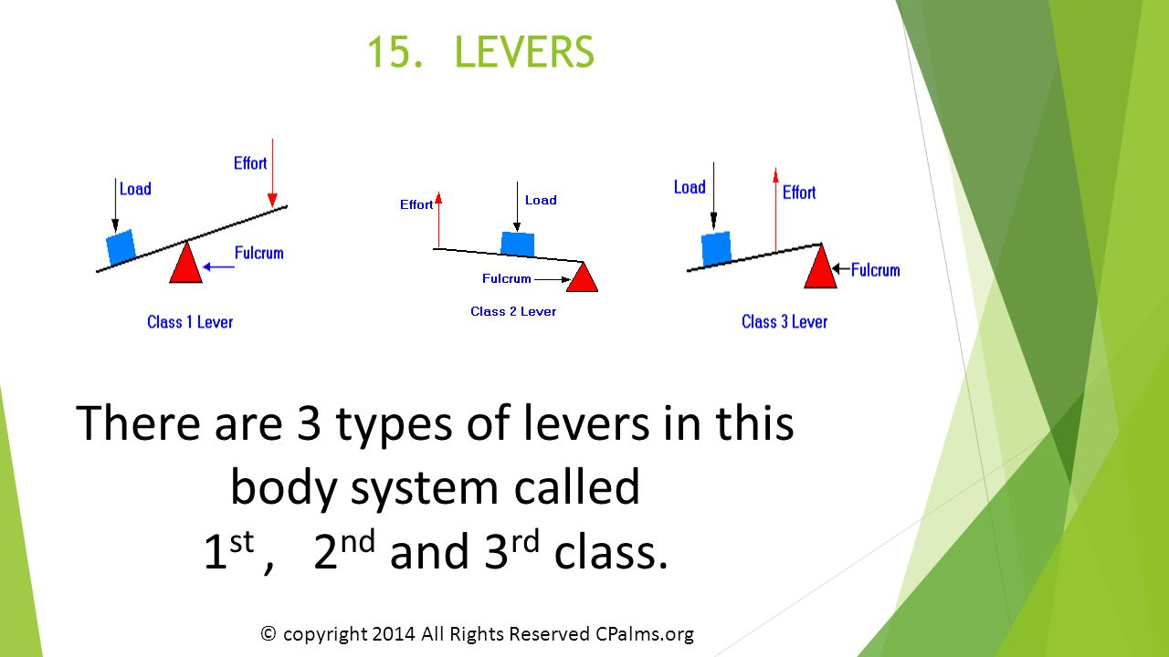 There are 3 types of levers in this body system called