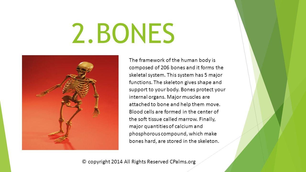2.BONES