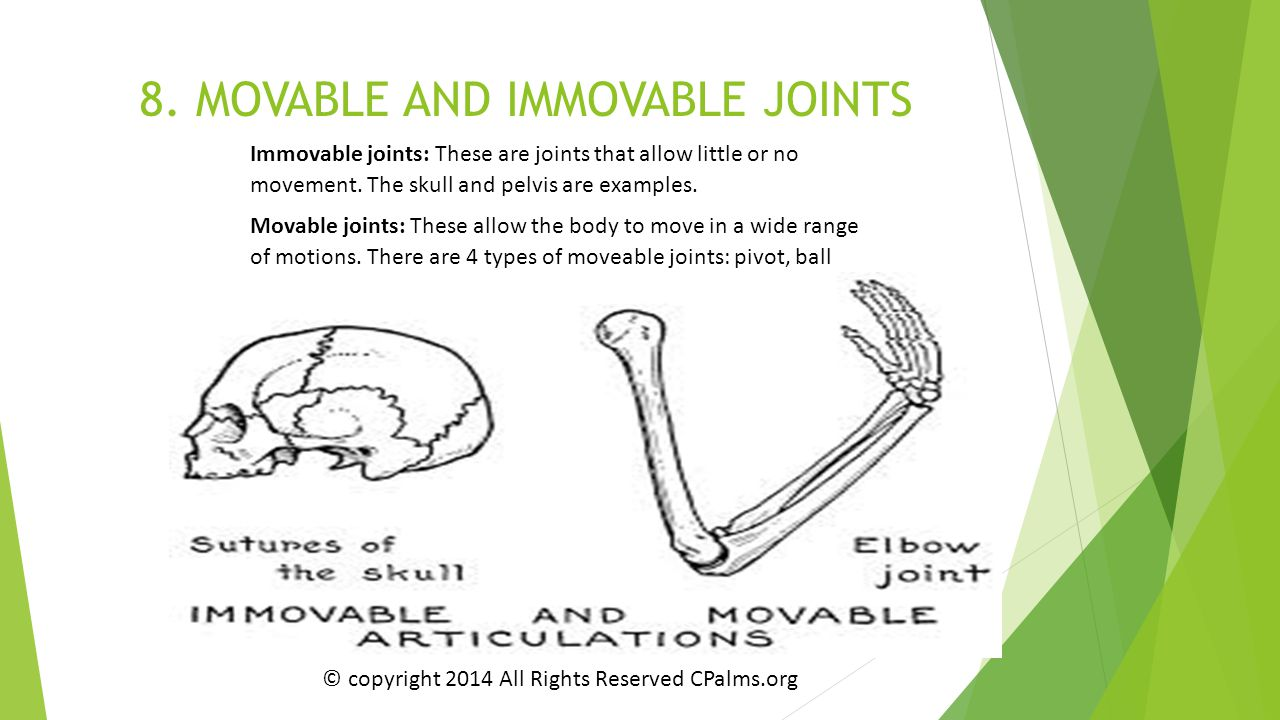 8. MOVABLE AND IMMOVABLE JOINTS
