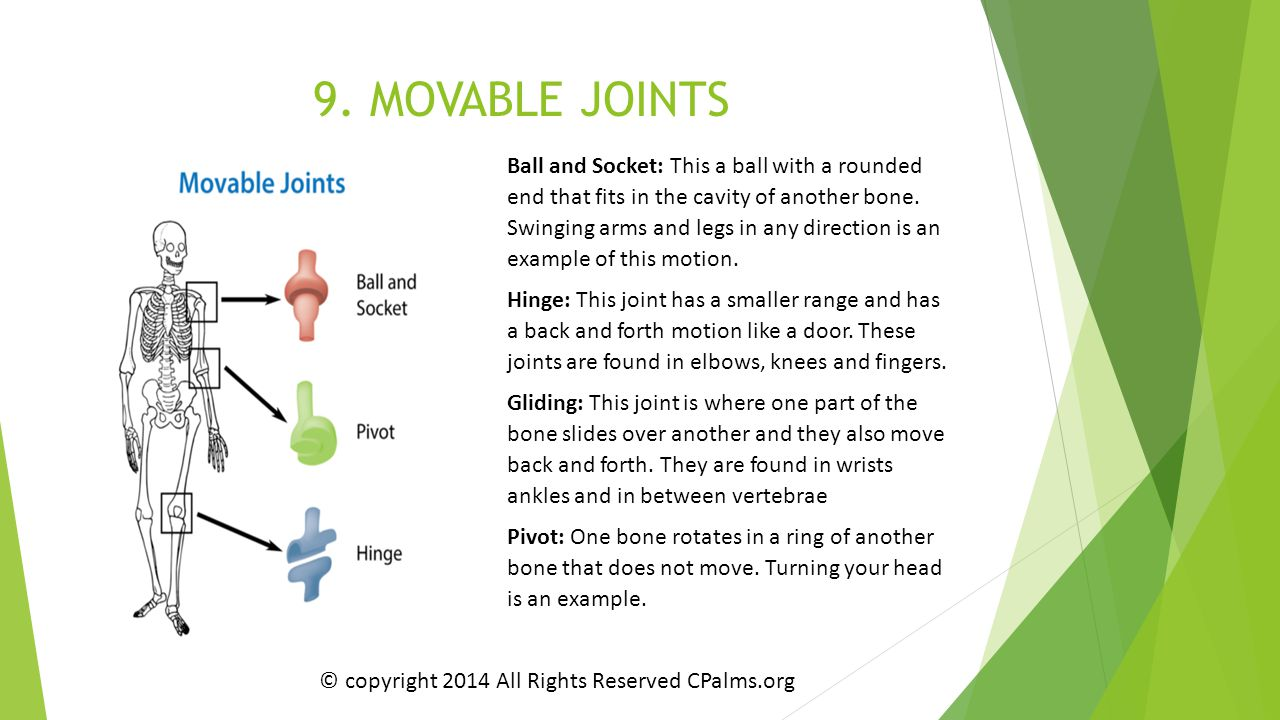 9. MOVABLE JOINTS