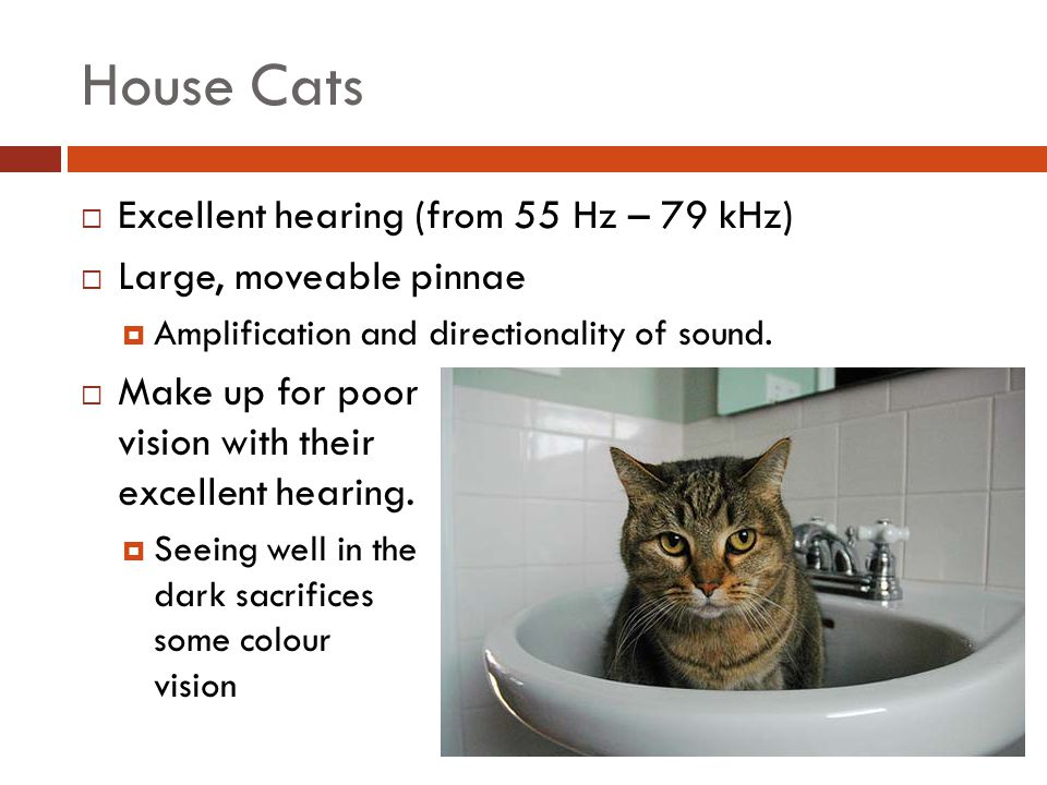 House Cats Excellent hearing (from 55 Hz – 79 kHz)