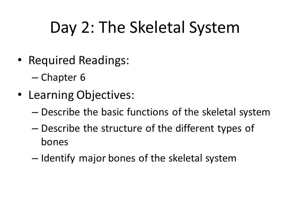 Day 2: The Skeletal System