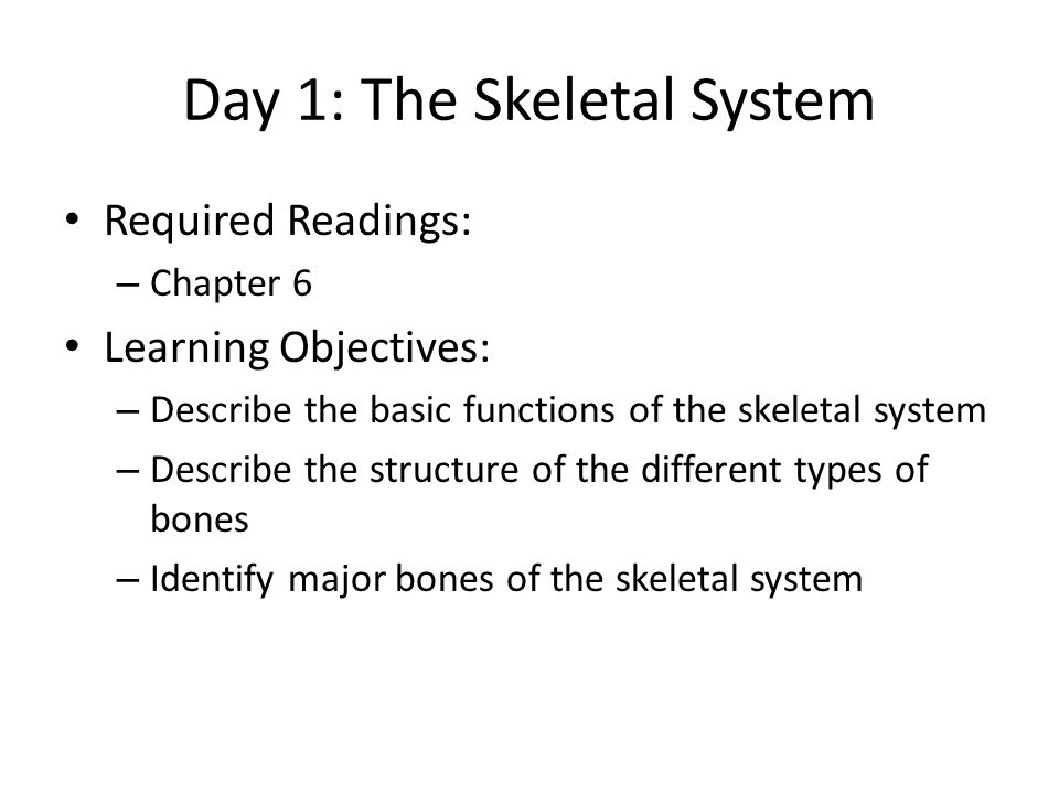 Day 1: The Skeletal System