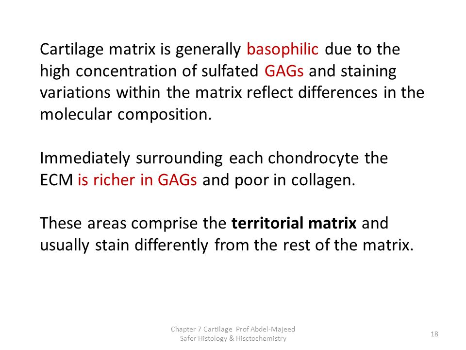 Cartilage matrix is generally basophilic due to the high concentration of sulfated GAGs and staining variations within the matrix reflect differences in the molecular composition. Immediately surrounding each chondrocyte the ECM is richer in GAGs and poor in collagen. These areas comprise the territorial matrix and usually stain differently from the rest of the matrix.
