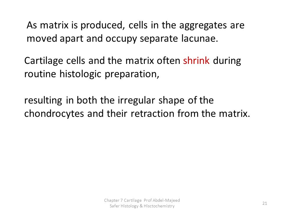 As matrix is produced, cells in the aggregates are moved apart and occupy separate lacunae.