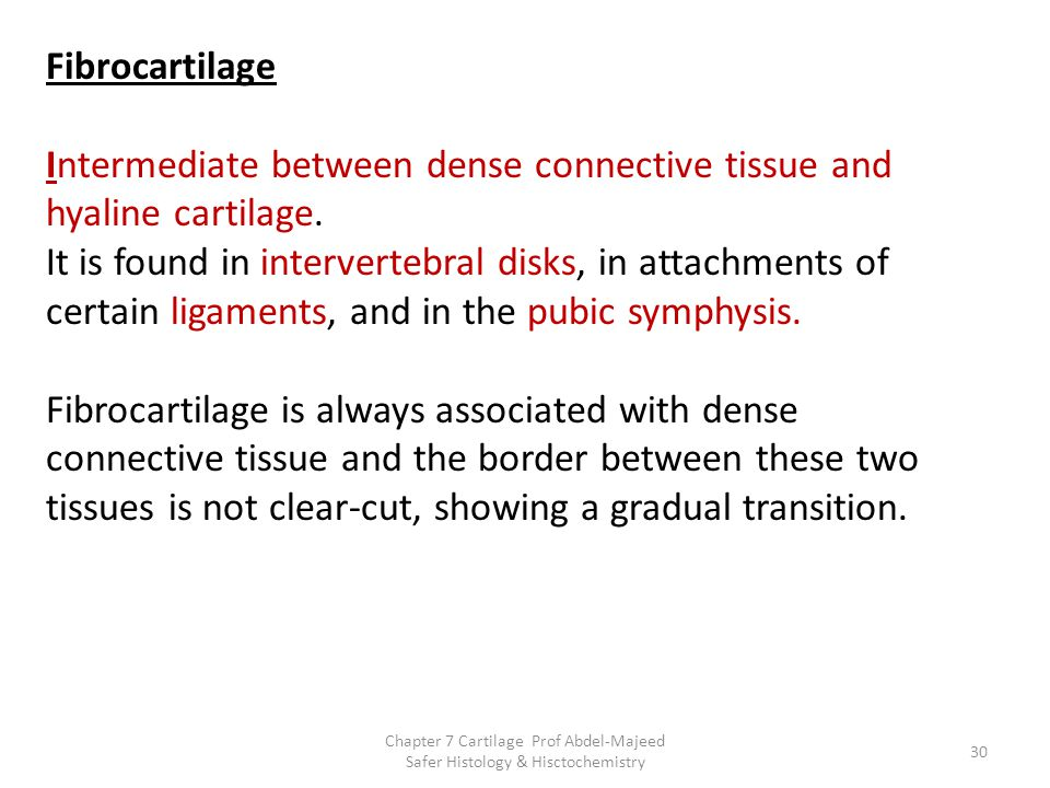 Fibrocartilage Intermediate between dense connective tissue and hyaline cartilage. It is found in intervertebral disks, in attachments of certain ligaments, and in the pubic symphysis.