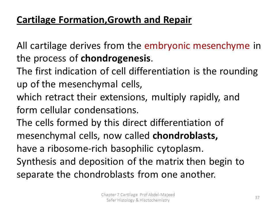 have a ribosome-rich basophilic cytoplasm.
