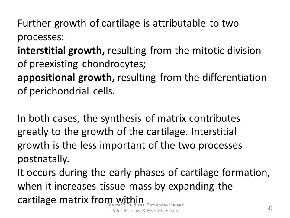 Further growth of cartilage is attributable to two processes:
