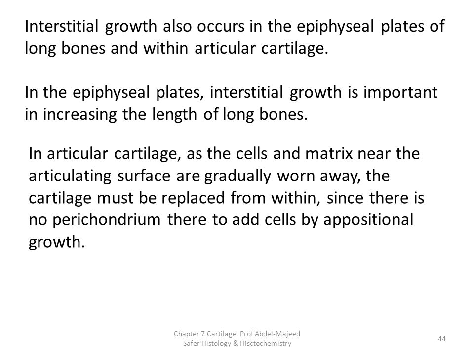 Interstitial growth also occurs in the epiphyseal plates of long bones and within articular cartilage.