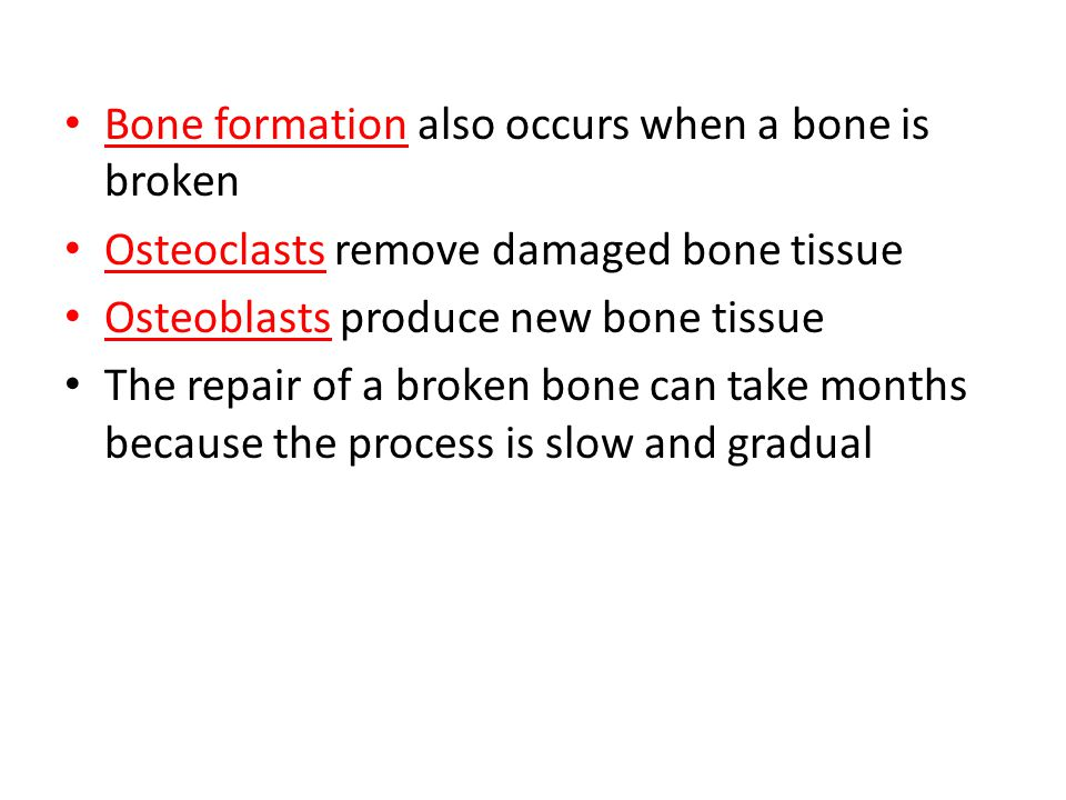 Bone formation also occurs when a bone is broken