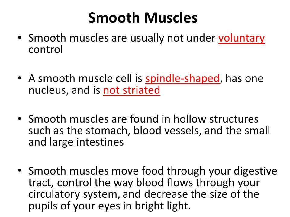 Smooth Muscles Smooth muscles are usually not under voluntary control