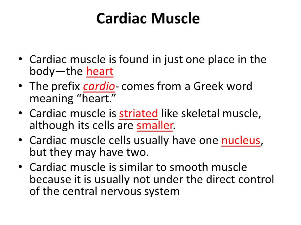 Cardiac Muscle Cardiac muscle is found in just one place in the body—the heart. The prefix cardio- comes from a Greek word meaning heart.