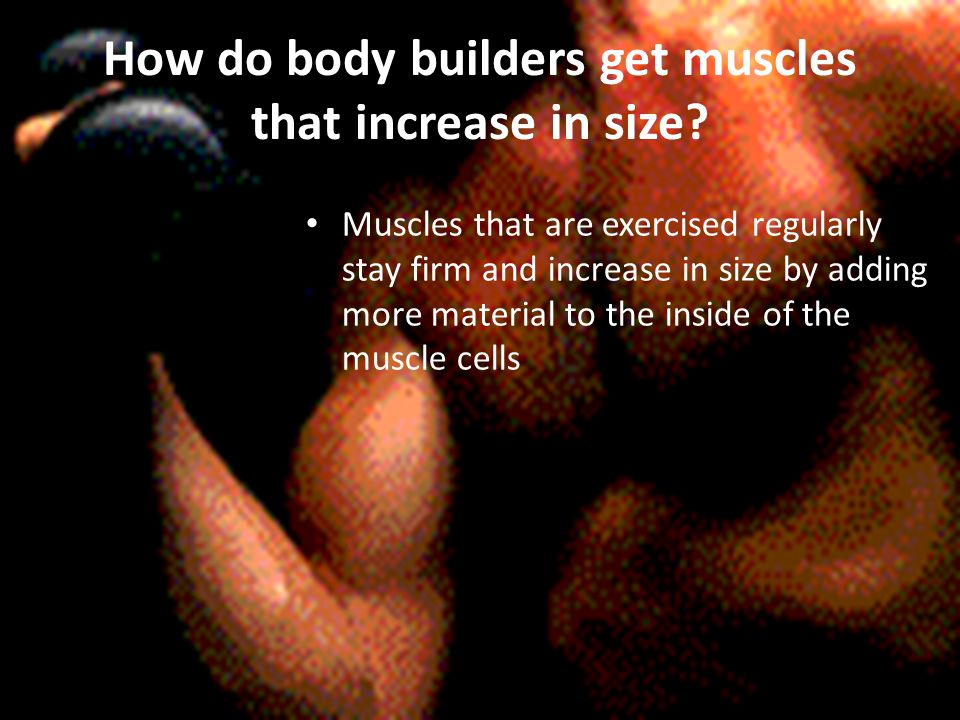 How do body builders get muscles that increase in size