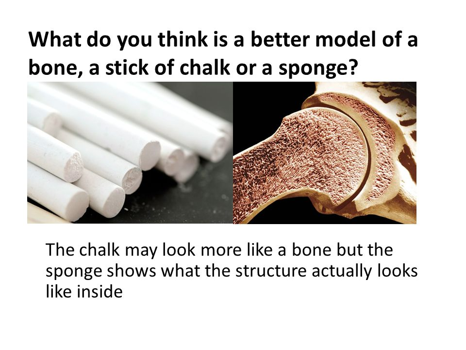 What do you think is a better model of a bone, a stick of chalk or a sponge