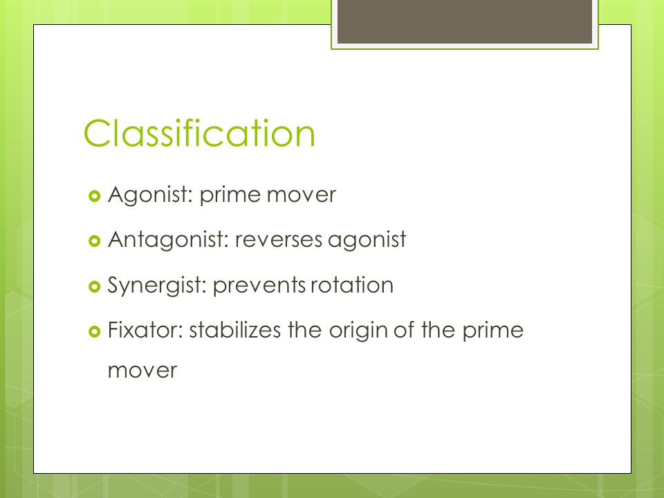 Classification Agonist: prime mover Antagonist: reverses agonist