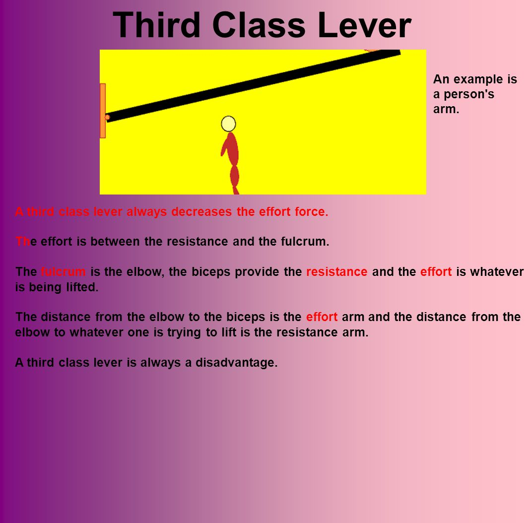 Third Class Lever An example is a person s arm.