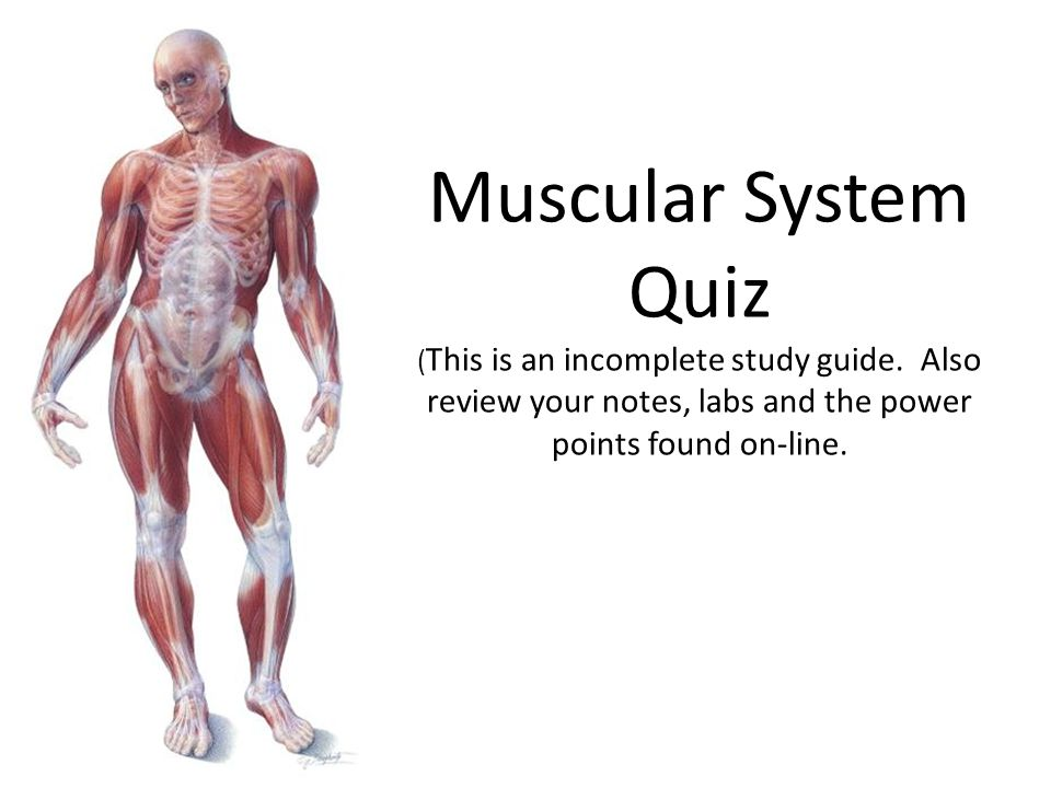 Muscular System Quiz (This is an incomplete study guide - ppt video ...