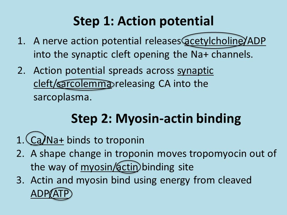 Step 1: Action potential