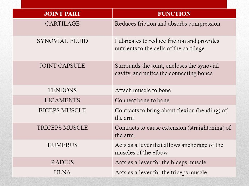 JOINT PART FUNCTION. CARTILAGE. Reduces friction and absorbs compression. SYNOVIAL FLUID.