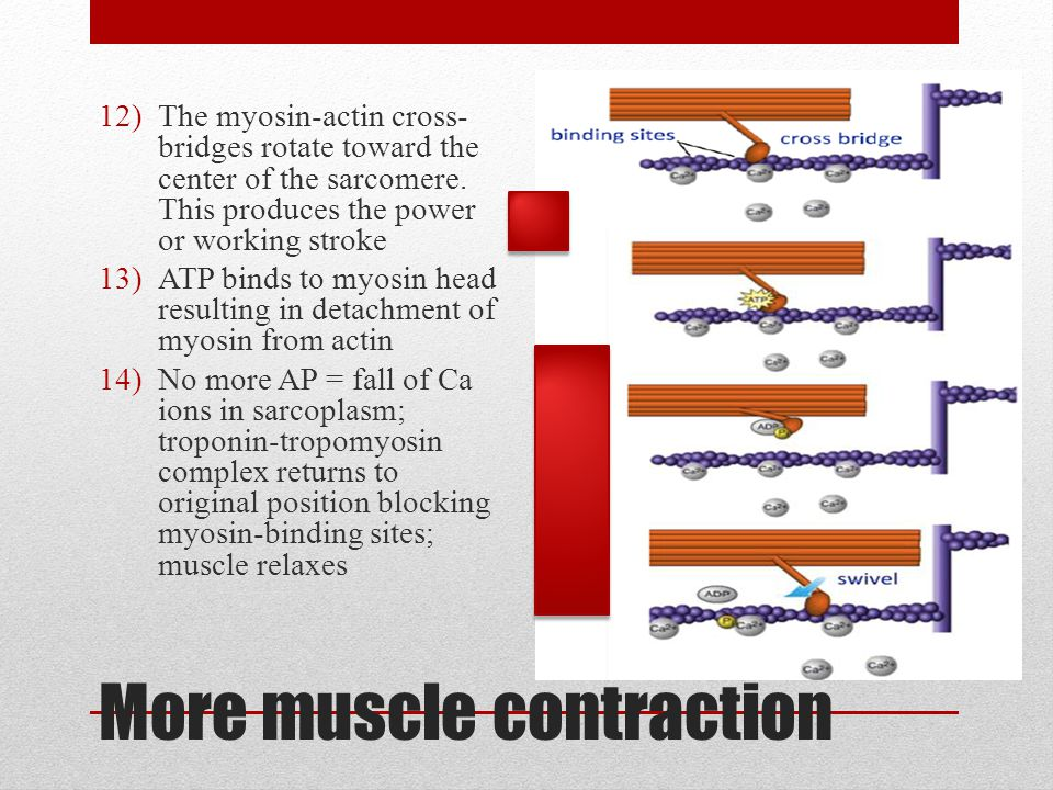 More muscle contraction