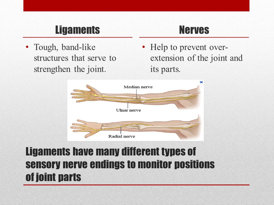 Ligaments Nerves. Tough, band-like structures that serve to strengthen the joint. Help to prevent over-extension of the joint and its parts.