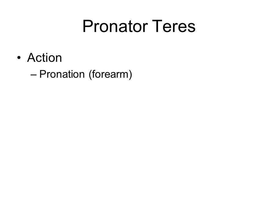 Pronator Teres Action Pronation (forearm)
